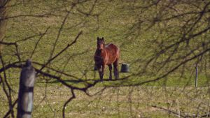 A horse looking at me by jorago