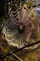 Web 4 by LucieG-Stock