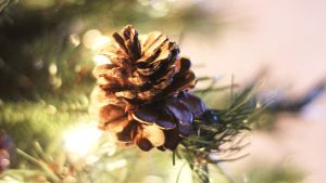 Christmas Decor 5 by Xiox231
