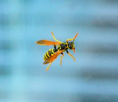 Wasp by floflagy