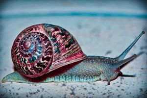 SnaiL... by tithta