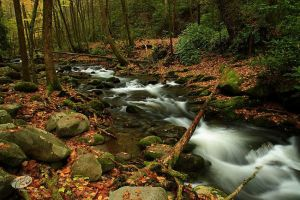 Smoky Mountain Stream, Autumn II by TRBPhotographyLLC