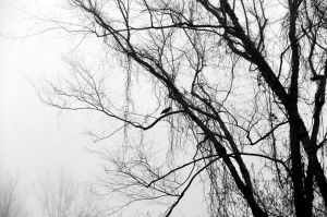 Perched Amongst the Tendrils by humanoid1