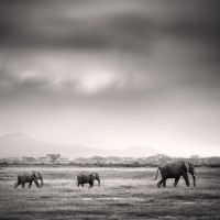 Tsavo East II by Jez92