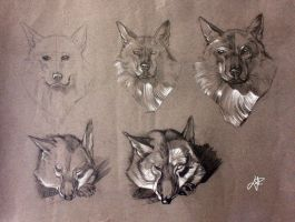 Dog sketches by LeeWhiro