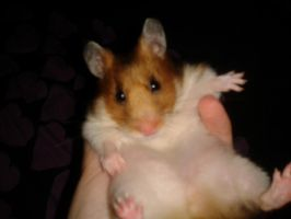 Alfie The Hamster 2 by OkamiRyuu1993