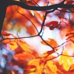 Autumn Abstract by incolor16