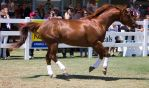 STOCK - Equitana 2013-442 by fillyrox