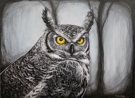 Owl Commission by asunder
