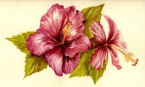 Hibiscus flower by gloriana