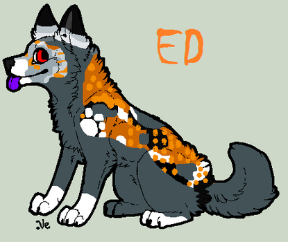 Ed-Profile by TheSheeranKennel