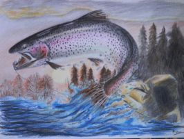 Rainbow trout by SusHi182