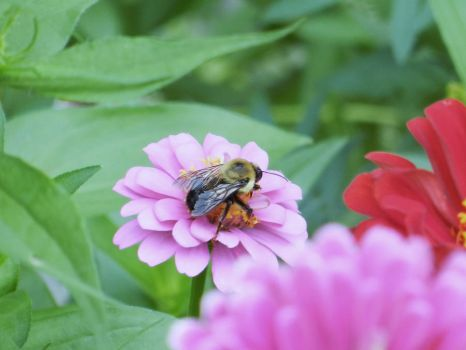 Bee Pic 1 by TheBigMC