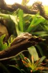 sleeping frog. by mieknox