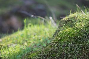 Mossy rock is mossy by Greensam17