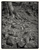 Trees and Stones 12 by HorstSchmier