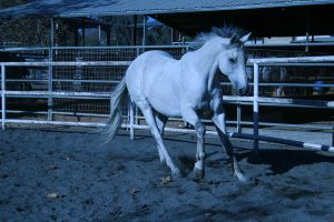 gray horse stock 12 by xbr0kendevotion