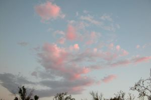 Floating Pink Powder Puffs by RooCat