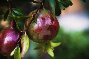 Pomegranate by Mereire