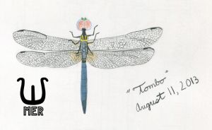 Tombo Dragonfly Prismacolor Drawing by towelgirl21