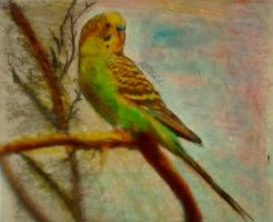 the littel bird 4 - budgerigar by AnnarXy