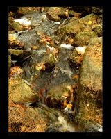 Autumn Water by maverick3x6