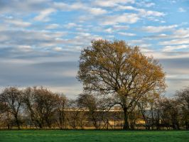 Rural Autumn by peterpateman