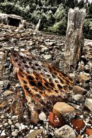 Grating:  Rusted and Corroding by basseca