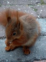 .. where are my nuts ? by eReSaW
