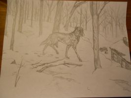 Dog in the woods by jmorrisson13