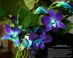 Purple and Cyan Orchids Stock 1 by Melyssah6-Stock