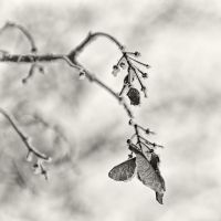 Cold Snapshots 03 by HorstSchmier