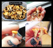 Polymer Clay Chanterelles by lily-inabottle