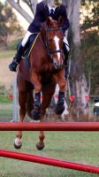 Showjumping front on chestnut by Chunga-Stock