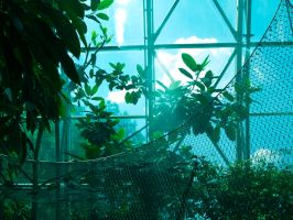 glasshouse2 by odina222