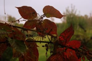 Reds and Greens by hm923