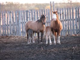 Mare and Foal 4 by okbrightstar-stock