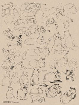 Cat sketches by shideh
