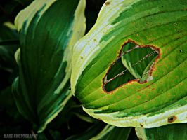 Hole in Leaf by Madz4ever