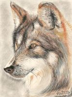 Wolf by marmicminipark
