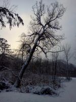 Winter snow in Highland park 007 by seaglasshunter