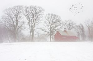 Red Barn in Fog by muffet1