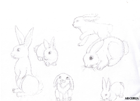 Bunny sketches by Arcuria