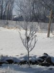 Smaller Frosted Tree by Xario1