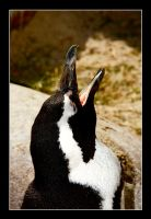 Yawning Pinguin by DeviantDrax