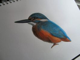 Kingfisher WIP by Becky125