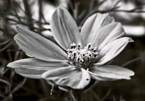 Black and white by Meireis