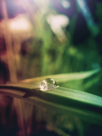 Nature's teardrop by Maddy95