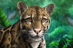 Clouded leopard by Bisanti