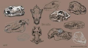 Animal Skulls Set by Decadia